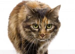 travis duncan cat photo
